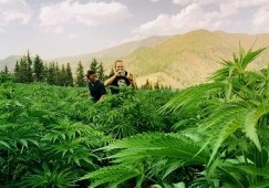 Marijuana Tourism - What You Need to Know Before Planning Your Green Vacation in California